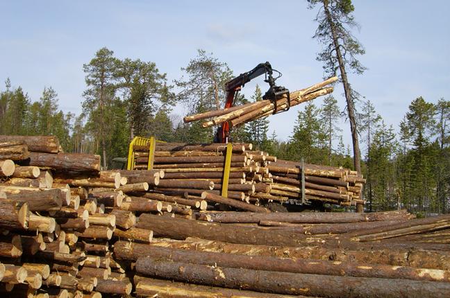 лесозаготовительная база