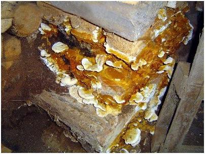 Грибки в деревянном доме